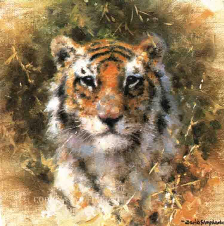 davidshepherd bengal tiger