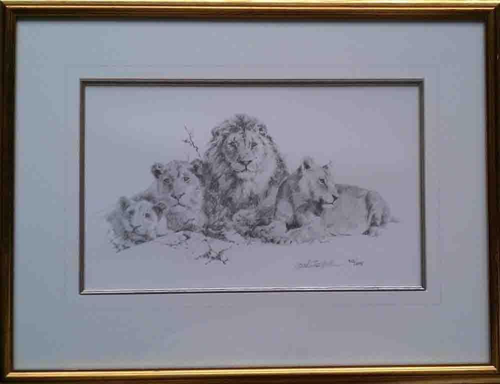 david shepherd, lions, b/w