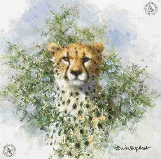 david shepherd cheetah cameo, print