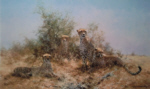 david shepherd Cheetah silkscreen print