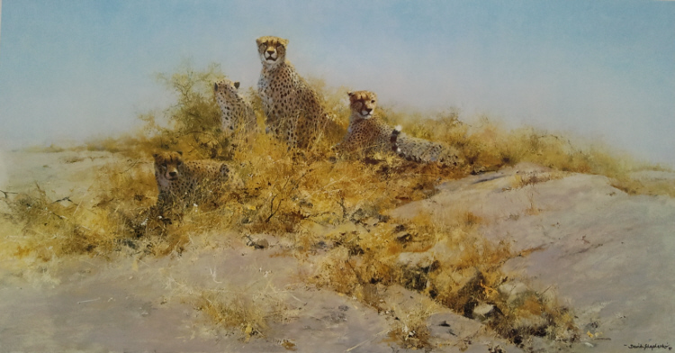 david shepherd cheetahs of namibia, print