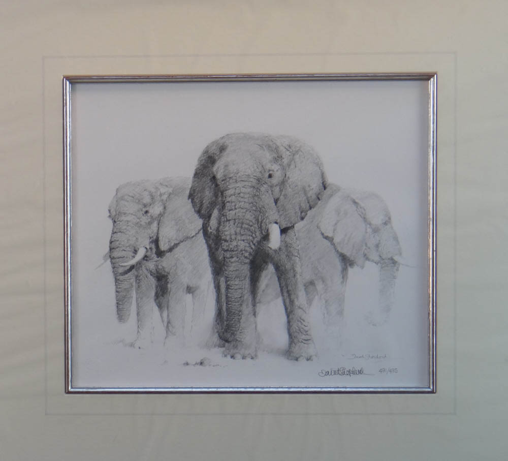 david shepherd  elephant pencil 1998