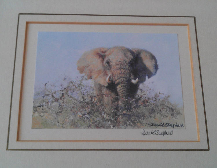 david shepherd signed elephant print