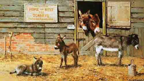 davidshepherd happy home for donkeys