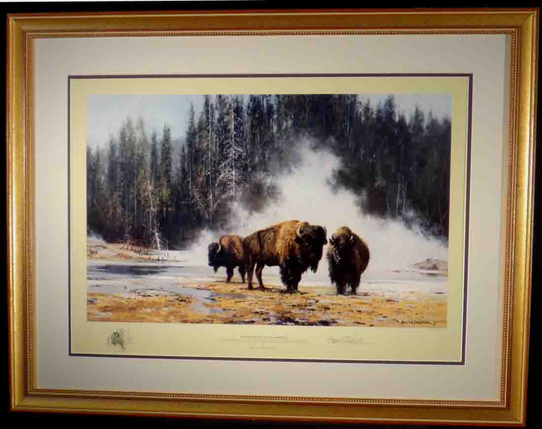 david shepherd, Bison, hot springs of yellowstone