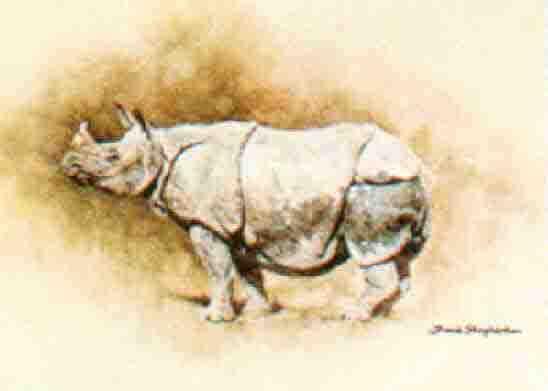 david shepherd indian rhino, rhinoceros
