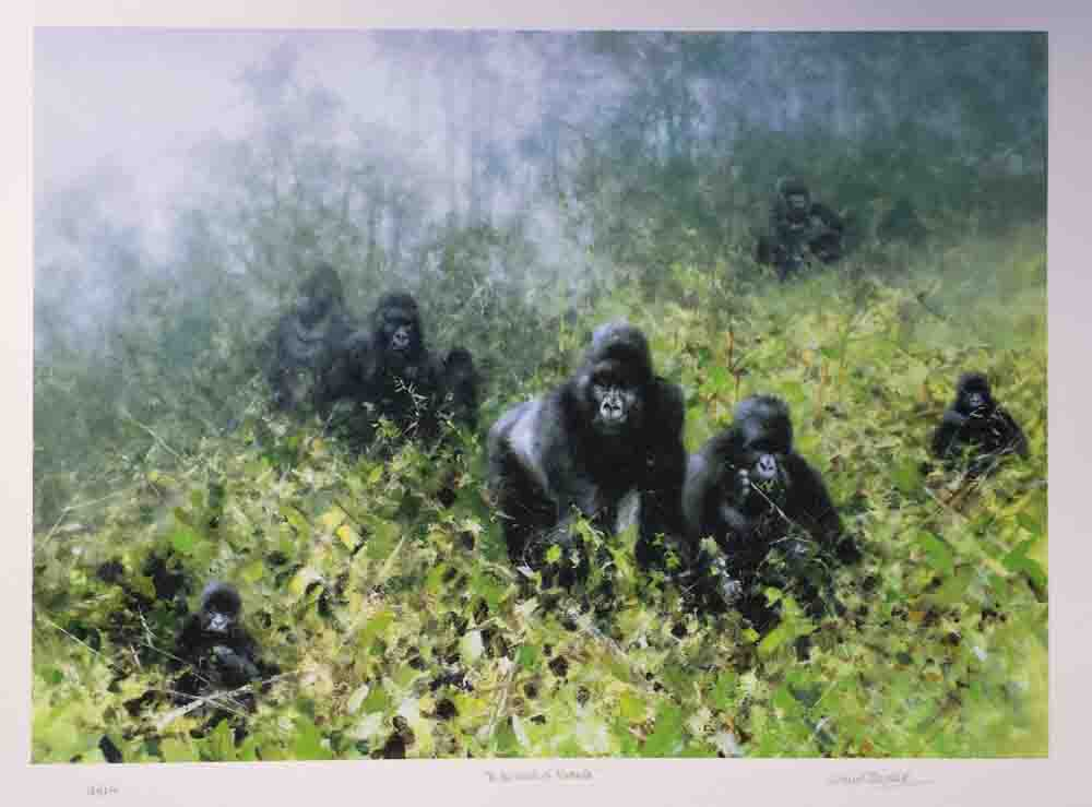 david shepherd in the mists of Rwanda, gorillas silkscreen print