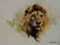 david shepherd lion head
