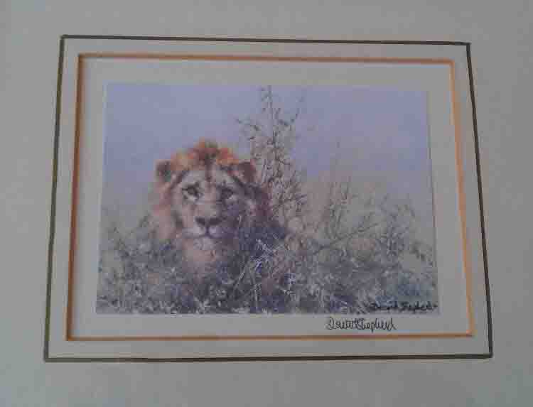 david shepherd signed lion print