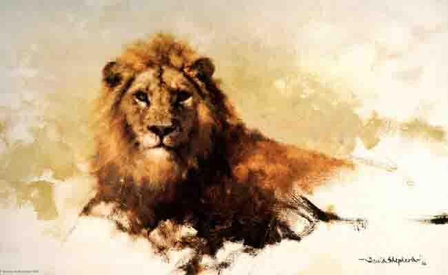 davidshepherd lion sketch 1986