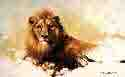 david shepherd lion sketch 1986 print