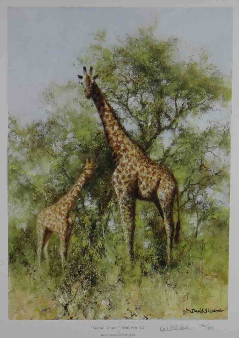 david shepherd, Masai Giraffe and Young, print