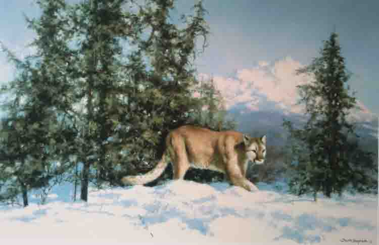 david shepherd mountain lion print