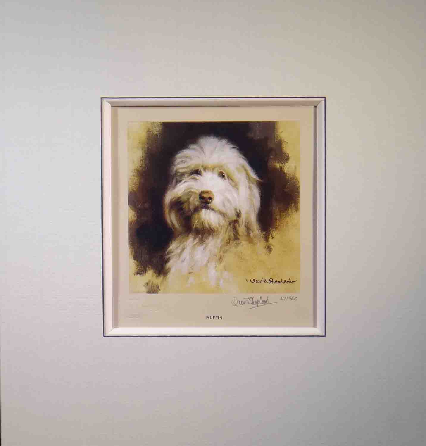 muffin, bearded collie, dog print