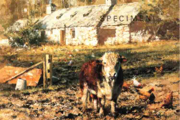 david shepherd  old ben's cottage, cows, cattle print