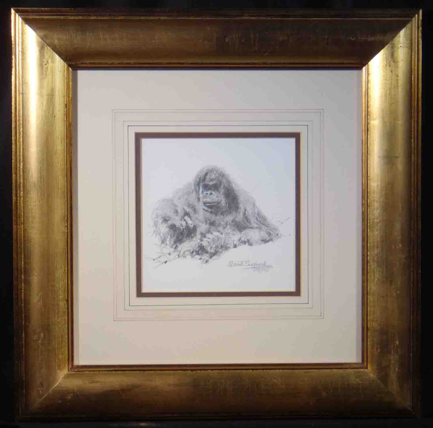david shepherd orang-utan sketch
