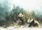 david shepherd, the pandas of Wolong, pandas, print