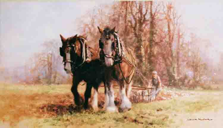 davidshepherd plough team horses