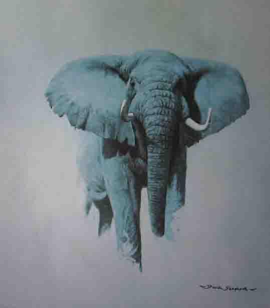 african bull elephant print david shepherd