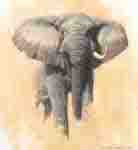 david shepherd African bull elephant elephants , signed, limited edition, print