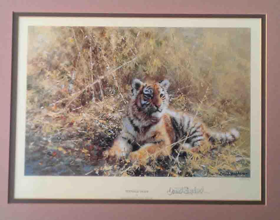 david shepherd Teenage Tiger print