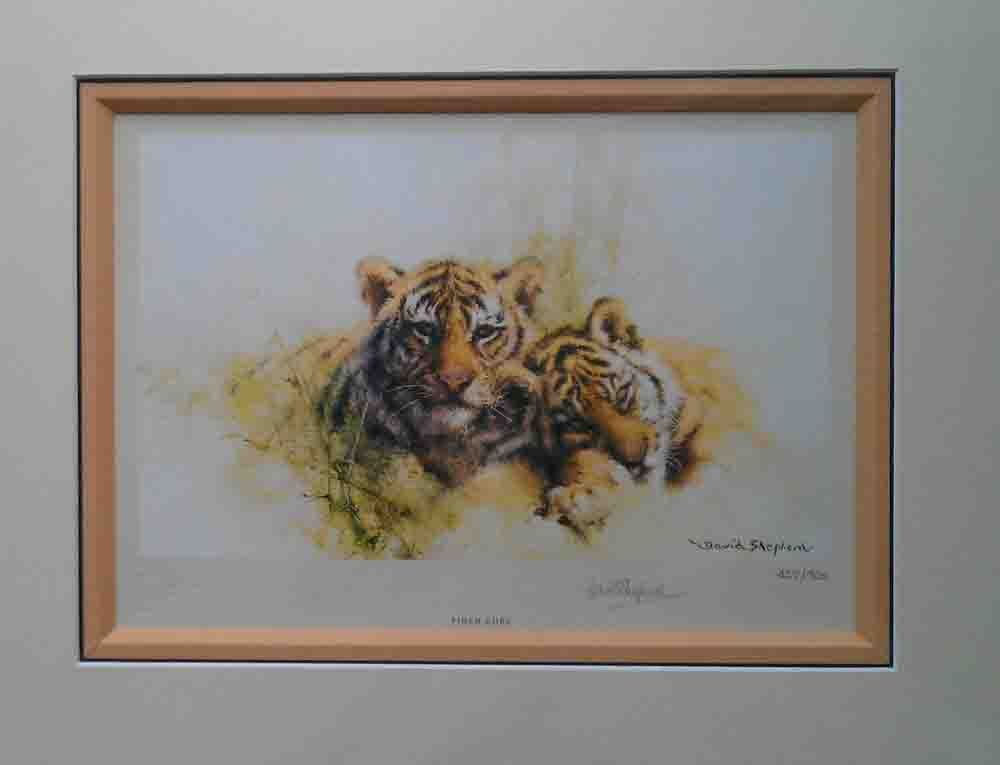 davidshepherd tiger cubs