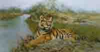 david shepherd, Tiger in the sun, print