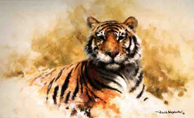 davidshepherd tiger sketch 1986