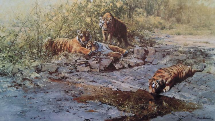 david shepherd, tigers of Bandhavgarh print