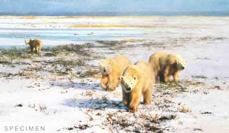 davidshepherd-lone wanders of the arctic
