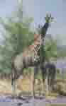 david shepherd watehole trilogy giraffes print