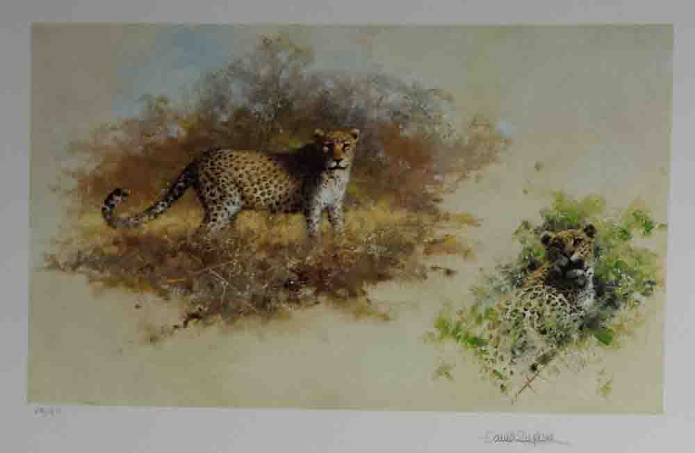 david shepherd wildlife of the world Leopards, portfolio