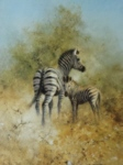 davidshepherd zebra mother foal