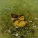 david shepherd ducks print